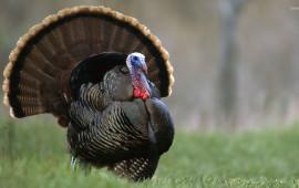 turkey-1276-1920×1080